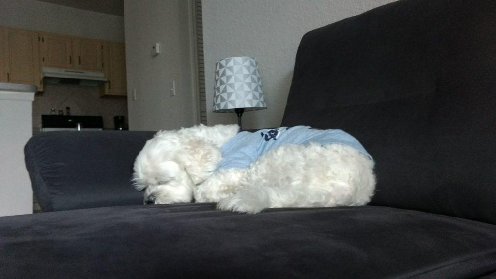 Yudi dormindo no sofá